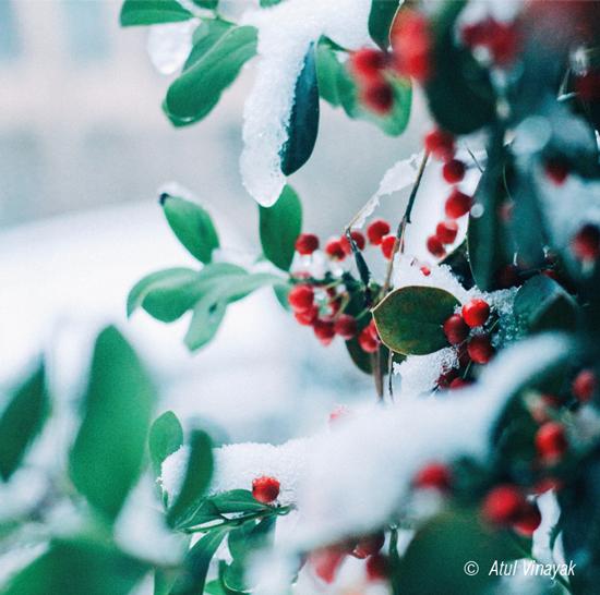 Winterliches Bild von frostbedecktem Baum